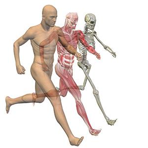 biomechanics-and-gait-analysis